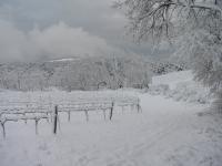 Vinyes d'hivern nevades