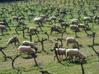 Turisme rural sostenible