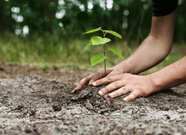 Planta un arbre